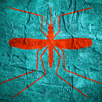 Zika Virus graphic